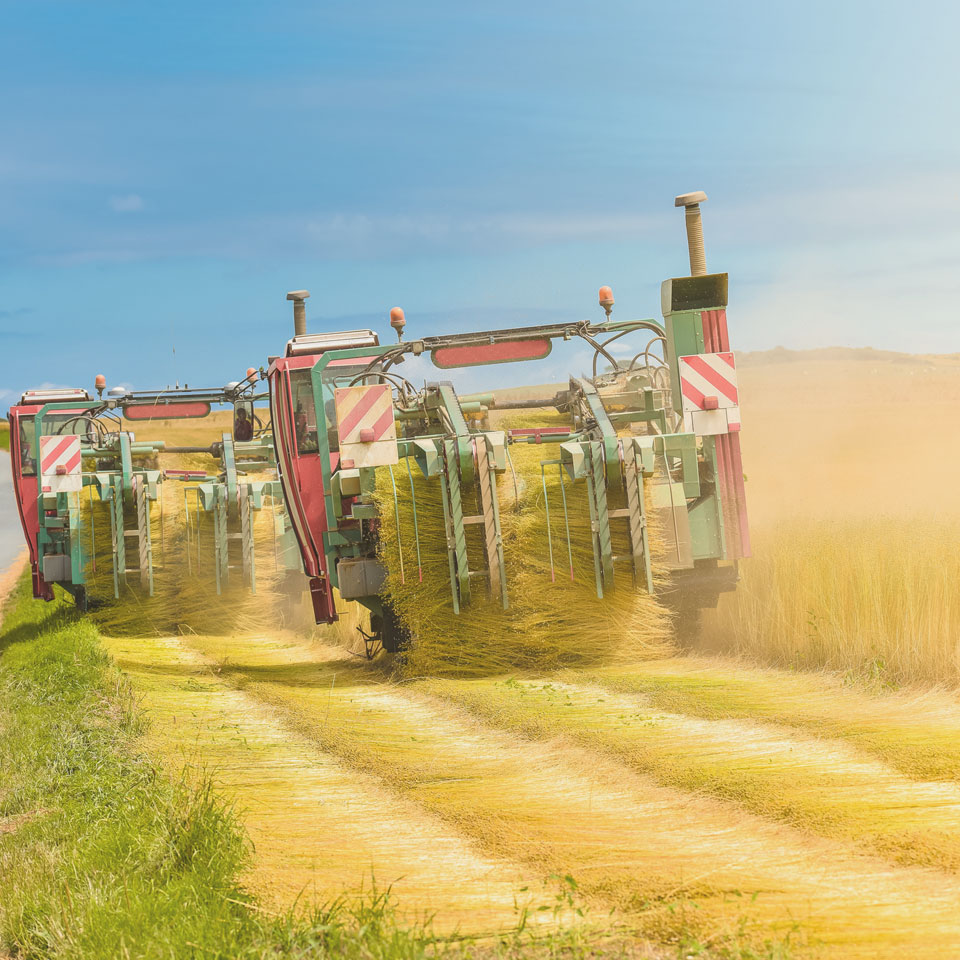 récolte du lin bio en France