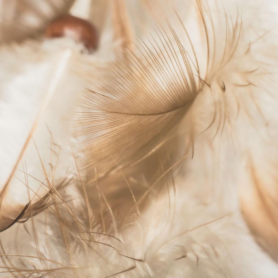 Commant laver un oreiller en plumes